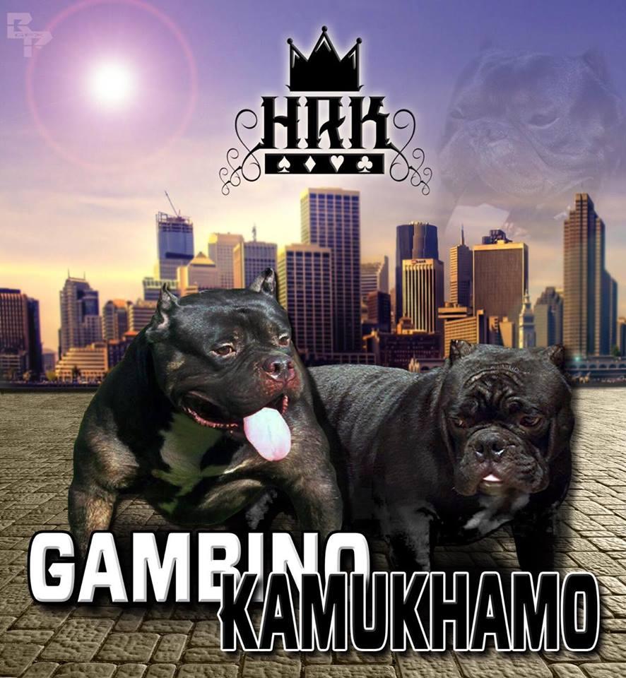 Gambino Kamukhamo