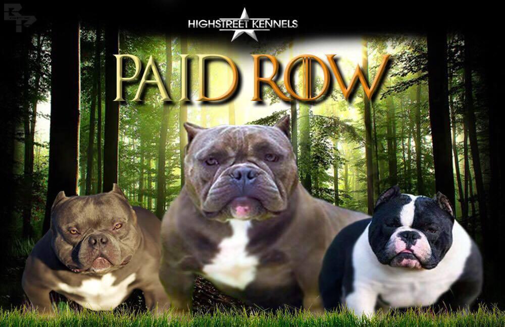 Paid Row