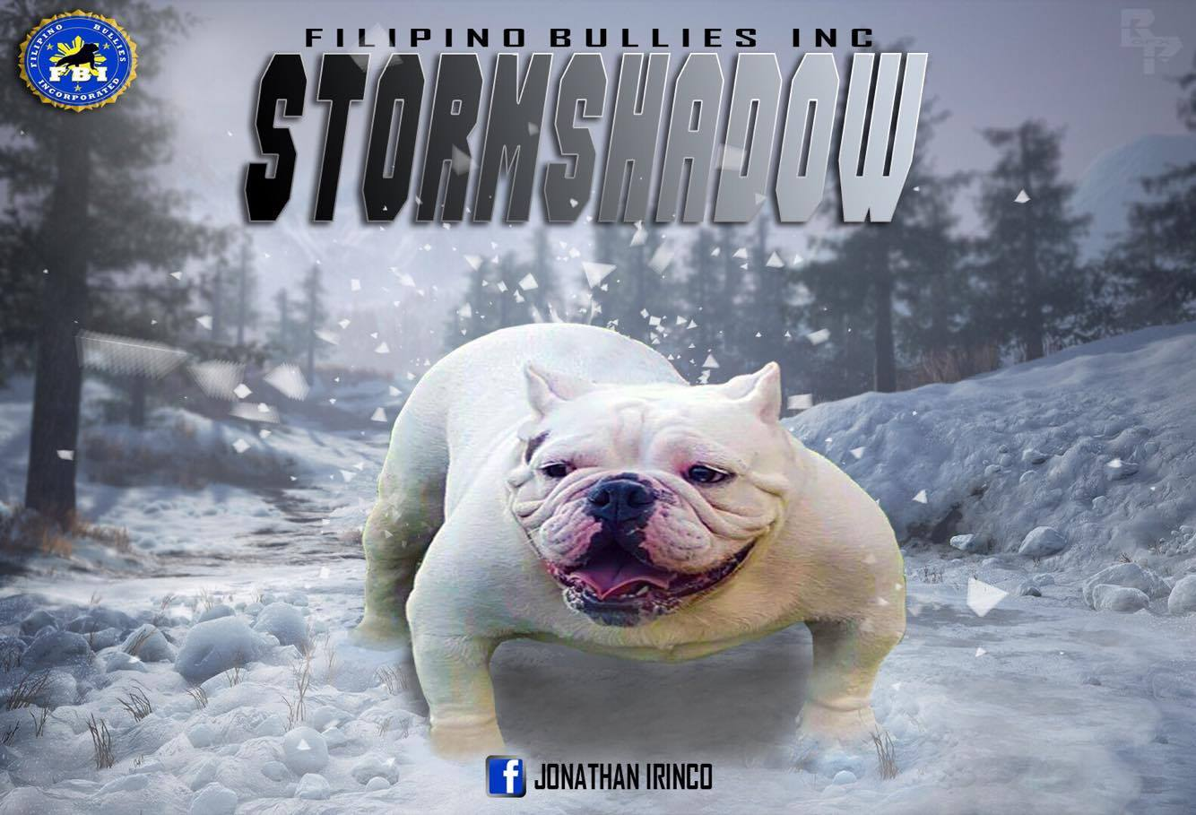 Filipino Bullies Inc - Storm shadow